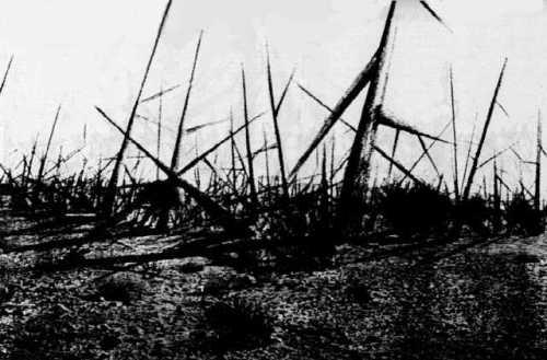 landscape_of_thorns